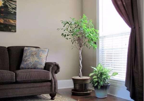 Ιδέες Ανακαίνισης <br />Τοποθετούμε φυτά, το αποτέλεσμα είναι εντυπωσιακά ωραίο